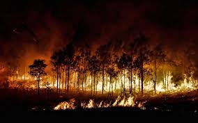 forest fire wallpaper 55 pictures