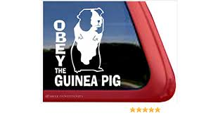 Amazon Com Nickerstickers Obey The Guinea Pig Cute Guinea Pig Vinyl Window Decal Automotive