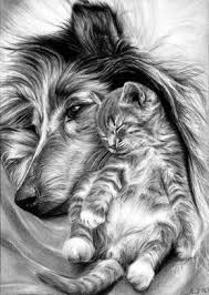 40 Realistic Animal Pencil Drawings Dieren Tekenen Dieren