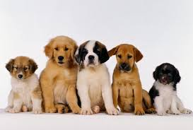 free puppy wallpapers for puter
