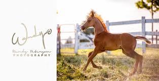 Wendy Peterson Photography | Arabian Horse Exchange