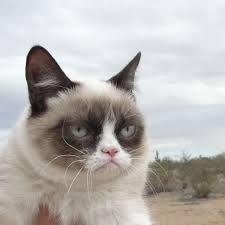 grumpy cat ipad wallpapers free