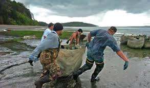 Geoduck farming faces challenge