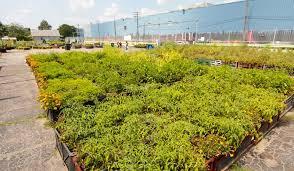 rich tradition of urban gardens