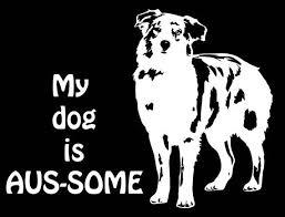 Pin By Kerri Aplin On Dogs In 2020 Australian Shepherd Merle Australian Shepherd Australian Shepherd Names
