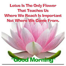 lesson from lotus flower good morning quotes