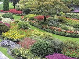 easy garden roll out flowers olde