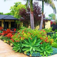 cool tropical gardens in the front yard