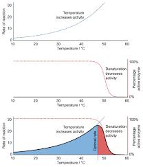q10 temperature coefficient wikipedia