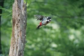 A Wonder of Evolution - Woodpeckers | BirdLife