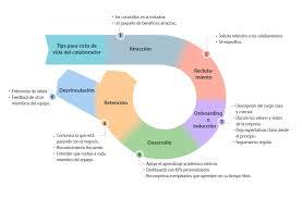 6 etapas del ciclo de vida del colaborador