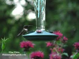 hummingbird nectar recipe how to make