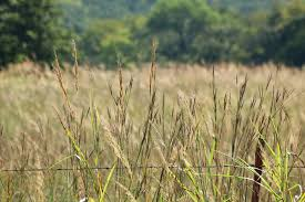 Wild Grass And Barbed Wire Fence Free Stock Photo Public Domain Pictures
