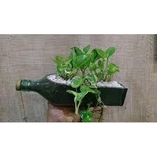 green bottle shape money plant pot for