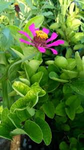 best daun dan pohon images plants garden beautiful sky