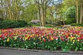 hd wallpaper garden flowers flower