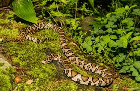 7 Ways To Keep Snakes Out Of Your Property