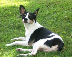 10 Breeds Of Dog You've Probably Never ...
