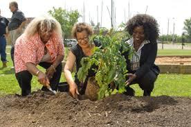 Garden nurtures community spirit | BramptonGuardian.com