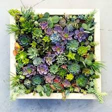 vertical succulent wall planter in