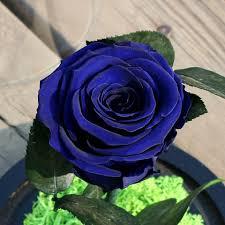 وردة زرقاء جميلة مناظر رائعه من الورود الزرقاء حلوه خيال