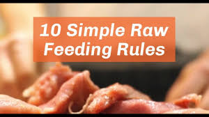 raw feeding primer 10 simple rules to