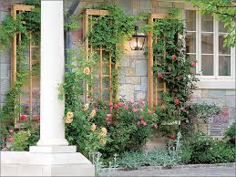 trellis ideas to add beauty to your garden