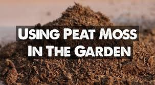 peat moss our guide on using sphagnum
