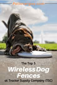 The Top 5 Wireless Dog Fences At Tractor Supply Company Tsc Pet Lover Guy
