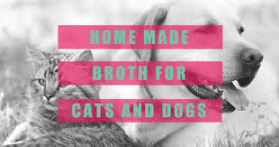 home made broth recipe for cats dogs