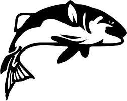 King Salmon Fish Vinyl Decal Sticker Car Window Wall Bumper Chinook Fly Fishing Myfriendsdentist Com
