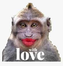 monkey monkeys kiss love funny