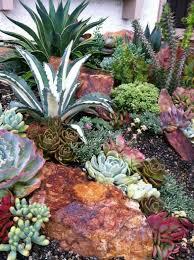 30 succulent garden ideas indoor and