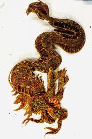 nian chinese dragon february theme