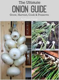 the ultimate onion guide grow harvest