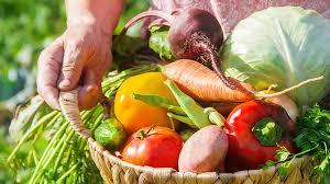 plan the best spring vegetable garden