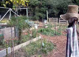 kresge garden co op