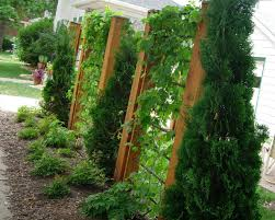 Easy Care Gardens Learn About Low Maintenance Gardening