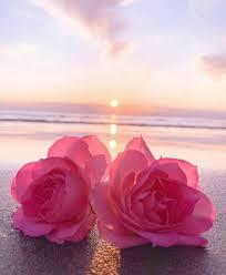 خلفيات الورد