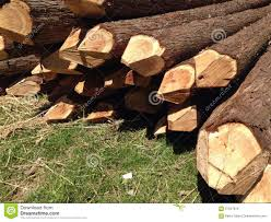 Stacked Fence Posts Stock Image Image Of Trees Posts 57047819