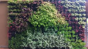 How To Grow A Vertical Garden Tips For Growing A Plant Wall At Home Bt