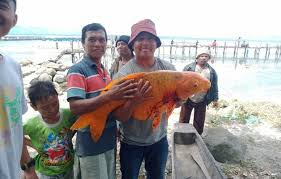 Mimpi Dapat Ikan Mas Angka Jitu Pool303