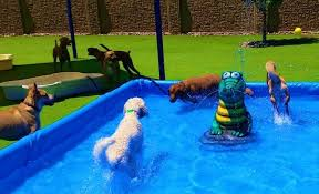 doggy daycare water park with one of