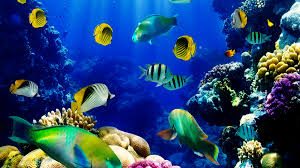 fish tank moving wallpaper dowload