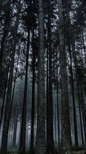 dark forest wallpaper iphone android
