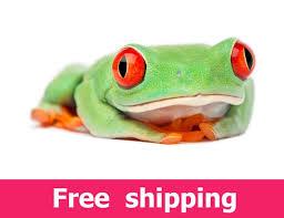 Red Eyed Tree Frog Wall Decal Nursery Wildlife Agalychnis Etsy