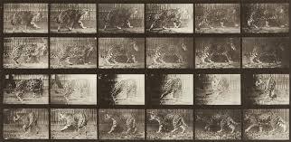 Eadweard Muybridge, Jaguar A: Walking B: Turning Around, 1887 | Marian  Goodman