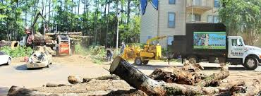 Why are Tree Removal Service Providers Important