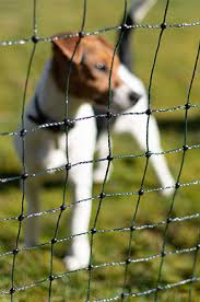 Dog Fence Professional Electric Invisible Fences