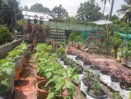 an organic farming revolution building